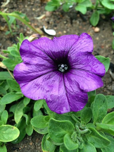 Purple Flower Flowers Eye Em Nature Lover Eyem Nature Lover