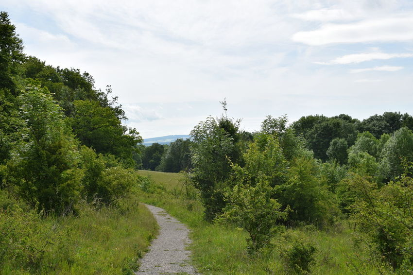 Auf dem Weg zum Wildkatzendorf Beauty In Nature Cloud - Sky Day Field Grass Green Color Growth Landscape Nature No People Outdoors Plant Road Scenics Sky The Way Forward Tranquil Scene Tranquility Tree