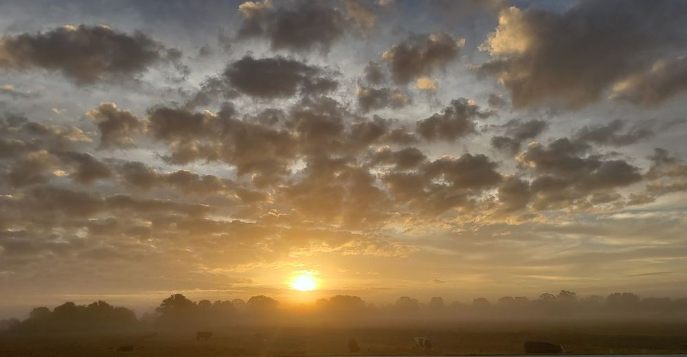 sunrise in the fog Cattle Grazing Clouds And Sky Cloudy Day Florida Sunrise Florida Nature Foggy Morning Palm Trees Trees And Sky Beauty Multi Colored Fog Gold Gold Colored Dawn Yellow