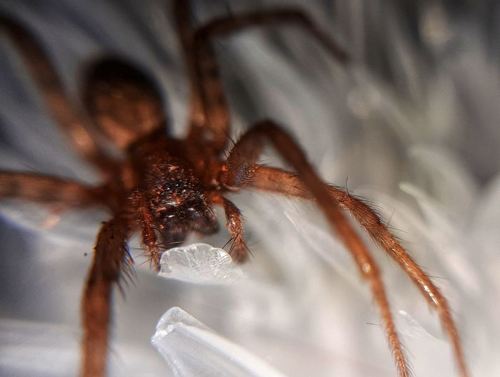 Spider Arachnid Photography EyeEm Selects Textile Close-up Arachnid Jumping Spider Animal Leg