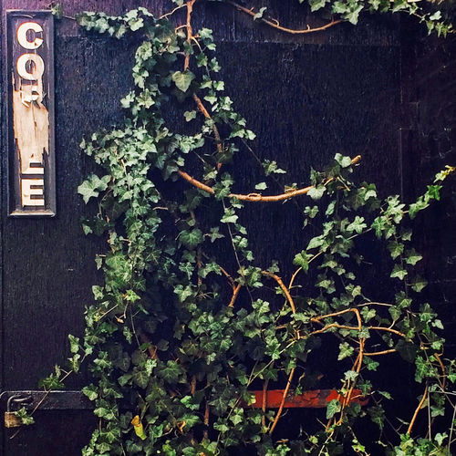 Coffee Abandoned Bad Condition Change Coffee Sign Deterioration Green Growth Leaf No People Old Padlock Plant Wall - Building Feature