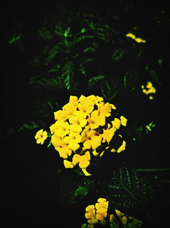 Loving the flower as my photography concept. ? IPSMinimalism EyeEm Flower EyeEm Beautiful Nature