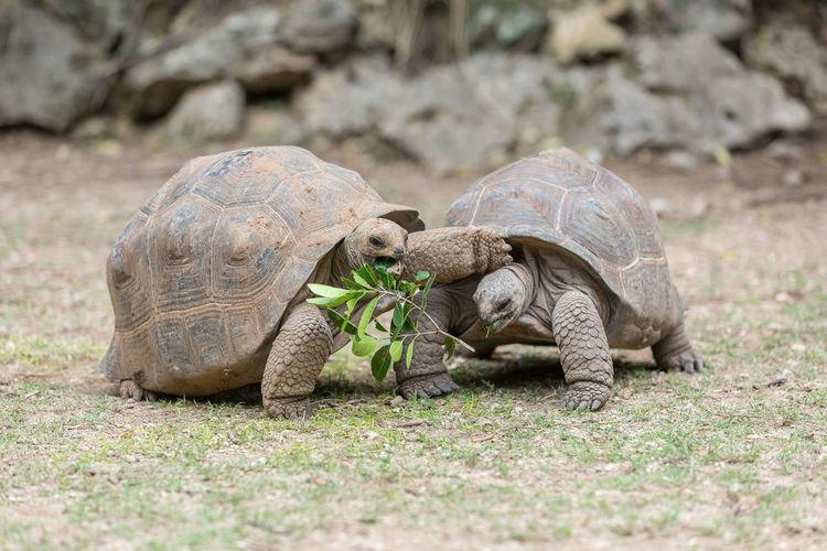 Tortoises on ground