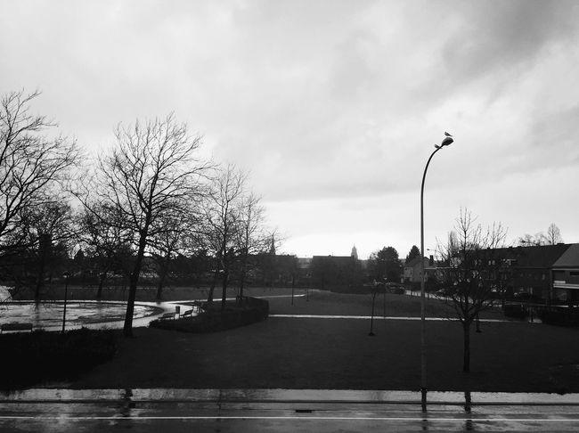 Morning pics are the best. Belgium Window View KRLMZYY Mrskrlmzyy Blackandwhite Sintniklaas Rain Myshot Iphone6