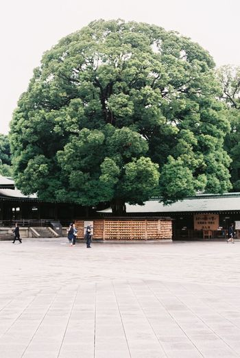 Absence Architecture Big Tree Building Exterior Built Structure Day Green Color House Incidental People Japan Leading Meiji-Jingu Outdoors Reflection Relaxing Moments Shrine The Way Forward Tokyo Tree World Heritage
