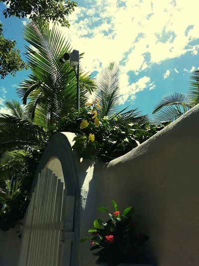 summer palm Queensland Outdooors Daylight Palm Sky Architecture Tree Sky Architecture Cloud - Sky In Bloom Growing Blooming