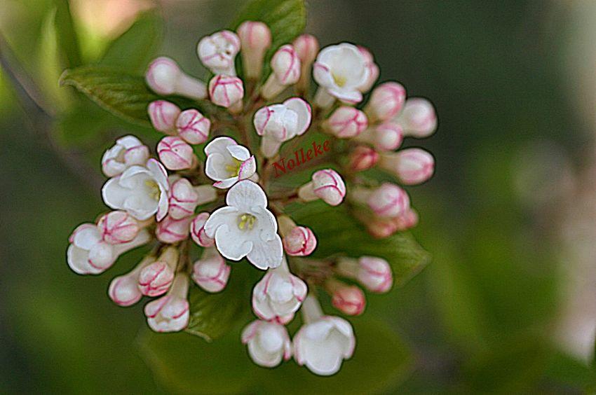 Streamzoofamily Flowerforfriends Spring Beautiful #noedit #nature #