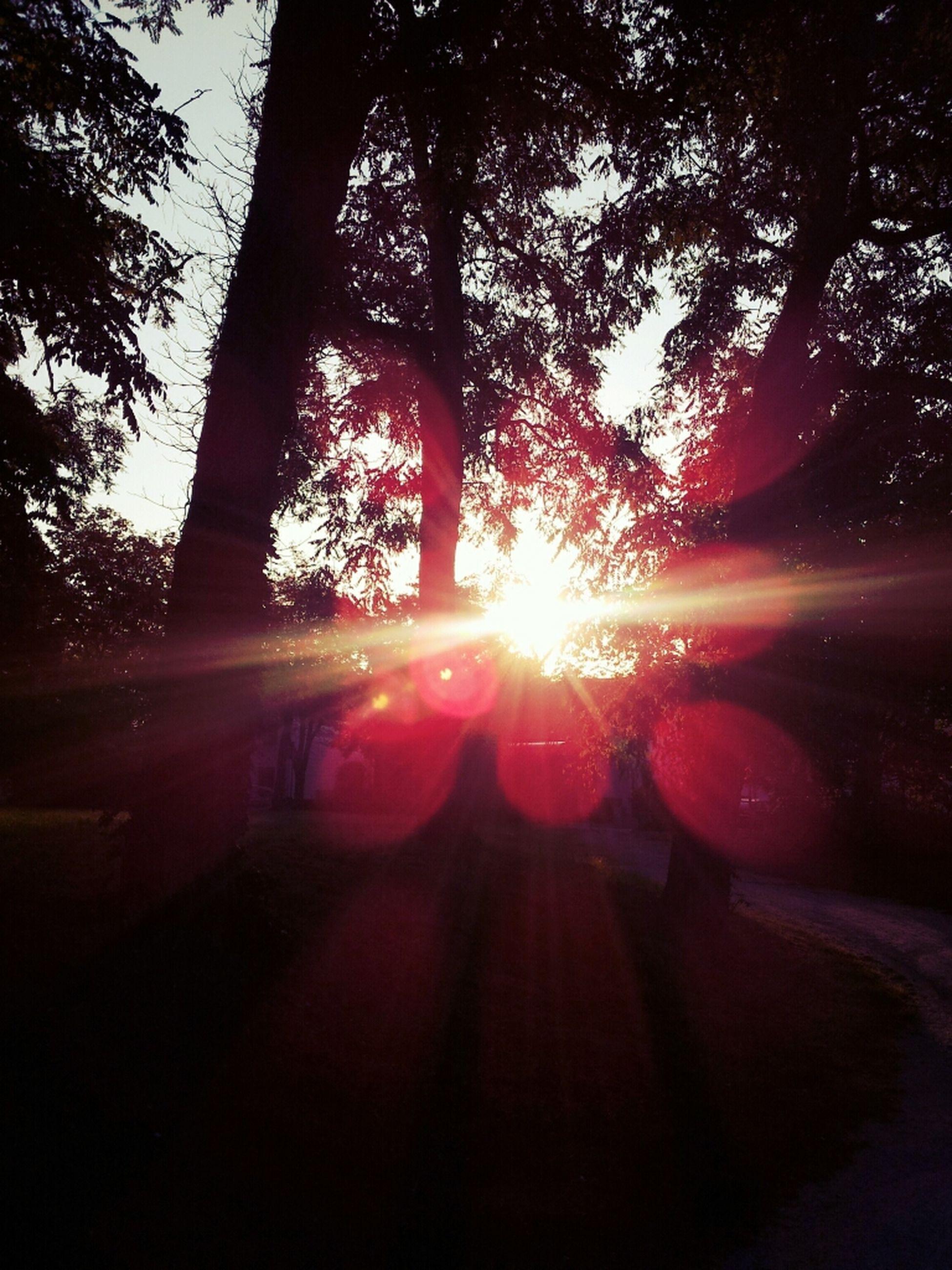 sun, tree, transportation, sunbeam, sunlight, lens flare, sunset, silhouette, car, land vehicle, road, mode of transport, the way forward, travel, back lit, sky, nature, shadow, street, tranquility