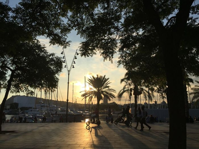 Barcelona Barceloneta Beauty In Nature Catalunya Nature Outdoors Palm Tree People Sky SPAIN Sunset Sunset In Barcelona Tourism Travel Travel Destinations Tree