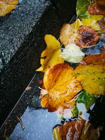 ... Suoni e colori di autunno... Multi Colored No People Yellow Close-up Day Nature Flower Outdoors Water Painted Image Piccoleprospettive HuaweiP9 Huaweiphotography Huawei Shots Autumn🍁🍁🍁 Autumn Collection Autumn Trees Autumn Rain Rain