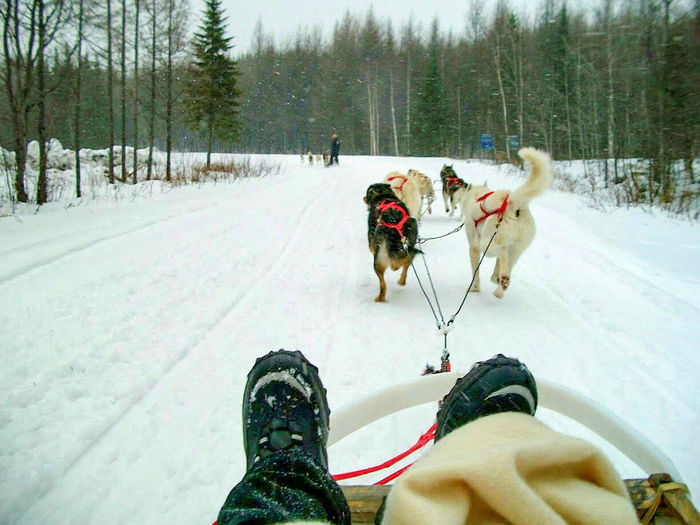 It's Cold Outside Dogsledding Dogs Snow Snowing Sledding Boots Snow Flakes Faune Quebec Canada