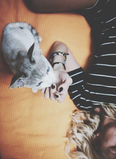 'Anything we make is our self portrait' Selfie Portrait Just For Fun Catlove Devonrex Animals Kitten