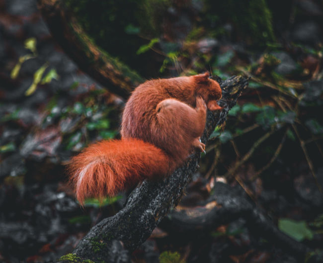 Squirrel in a forest