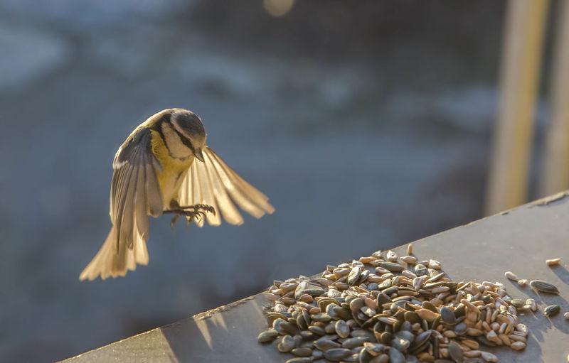 Outdoors Close-up Birds
