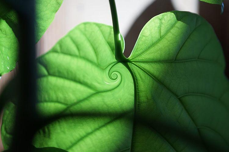 Green light Green Eyem Best Shots EyeEm Nature Lover Eyeemphotography Eye Em Nature Lover EyeEm Best Shots Photography Eyeemphotography