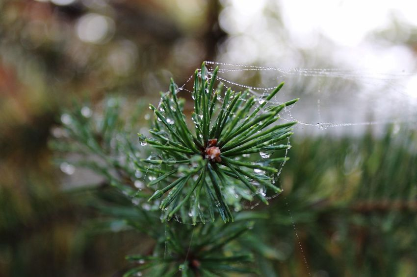 Drop Freshness Wet Focus On Foreground Water Green Color Nature Leaf Beauty In Nature Fragility Close-up Outdoors EyeEmNewHere Shades Of Winter The Still Life Photographer - 2018 EyeEm Awards The Great Outdoors - 2018 EyeEm Awards