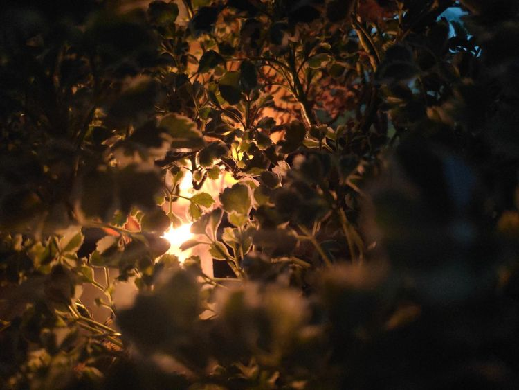 Randomshot Light Trail Color Portrait Timepass Clicks Essence Of Life Photographing Lights At Night Tree Tree Area Illuminated Sunset Beauty Flower Leaf Natural Parkland Multi Colored Arts Culture And Entertainment Reflecting Pool Flower Head Woods Reflection Lake Single Tree Flowering Plant