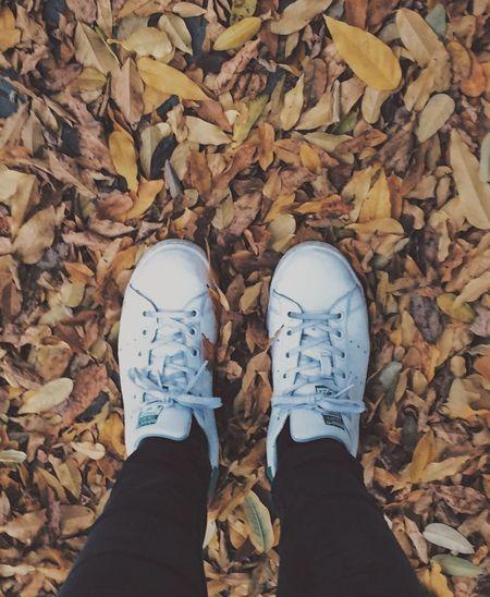 El paso del tiempo marcado por las estaciones del año 🍁🍂🍃 Lifestyles Autumn Personal Perspective Canvas Shoe IPhoneography Yellow Leaves Time Passes By Flying High Long Goodbye