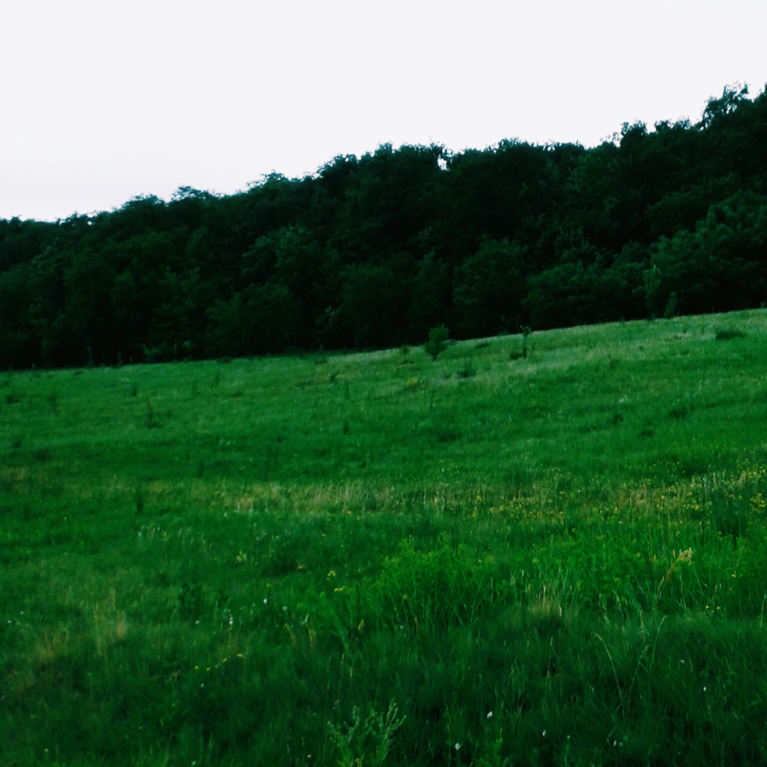 tree, grass, green color, tranquil scene, tranquility, growth, field, grassy, landscape, beauty in nature, scenics, nature, clear sky, lush foliage, green, non-urban scene, forest, idyllic, day, outdoors