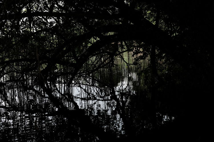 Silhouette trees by lake in forest