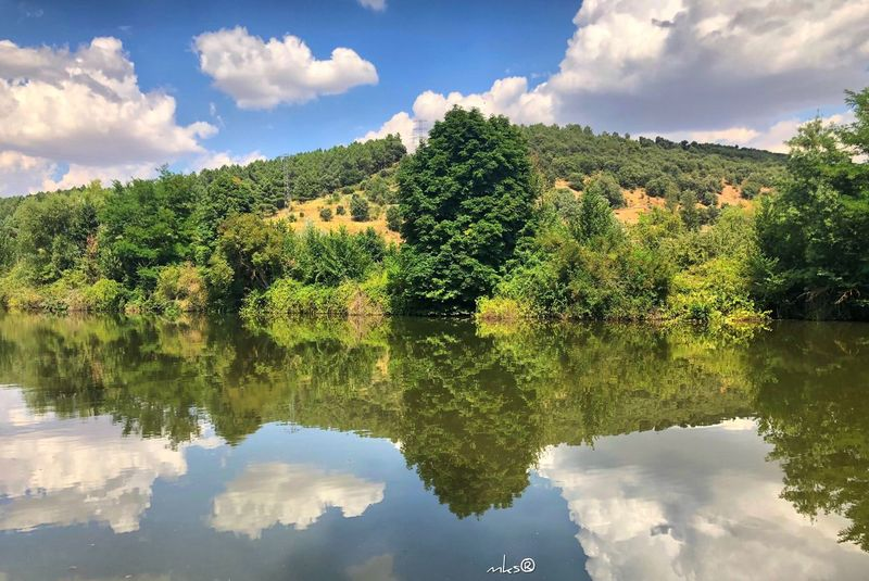 Reflected Cloud - Sky Bestoftheday Travel Destinations Photography EyeEm Best Shots Landscape Water Cloud - Sky Sky Reflection Water Plant Tree Tranquility Outdoors Beauty In Nature Nature