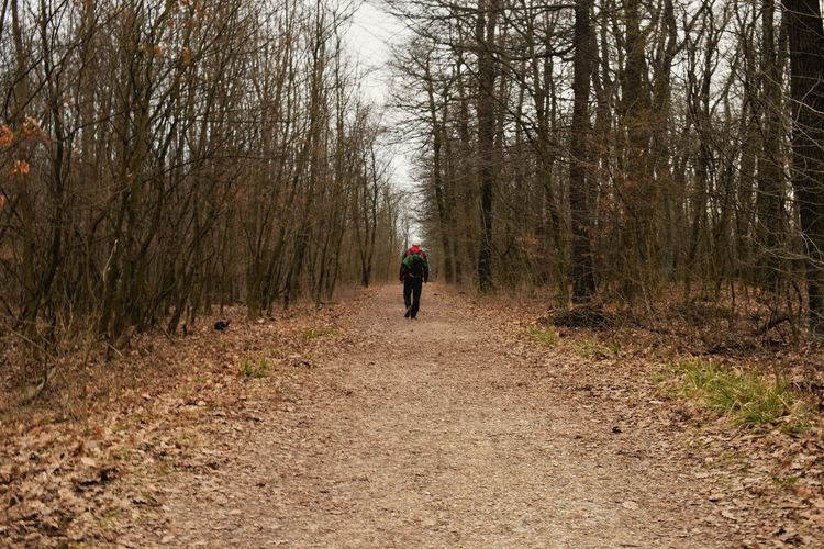 Rear View Of Man Walking Amidst Bare Trees At Forest