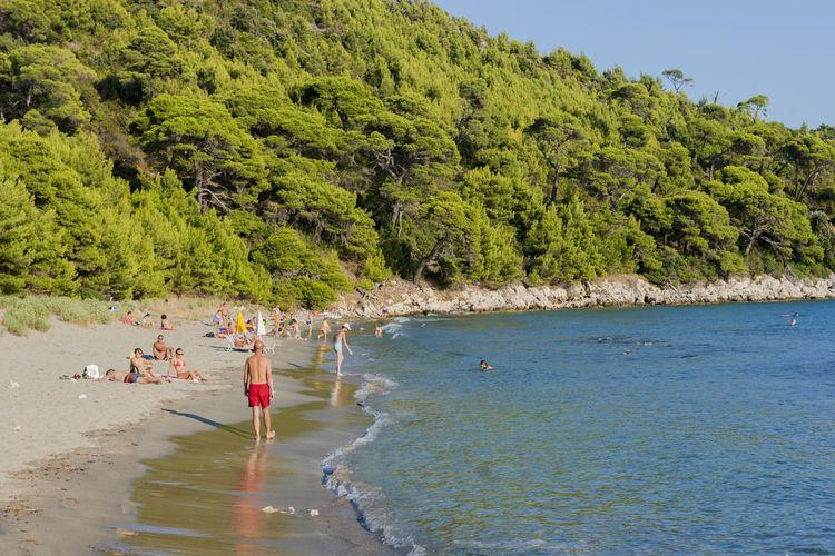 People on beach against trees and sea