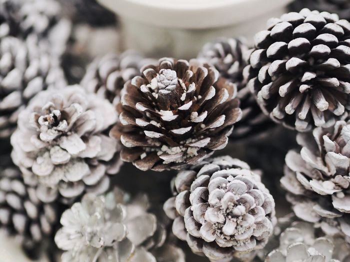Close-Up Of Pine Cones During Winter