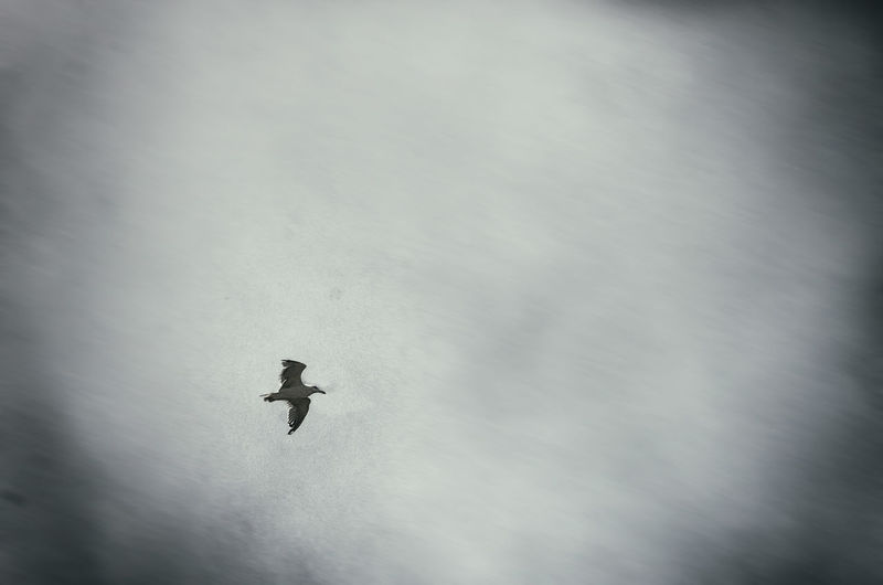 Low angle view of flying against sky