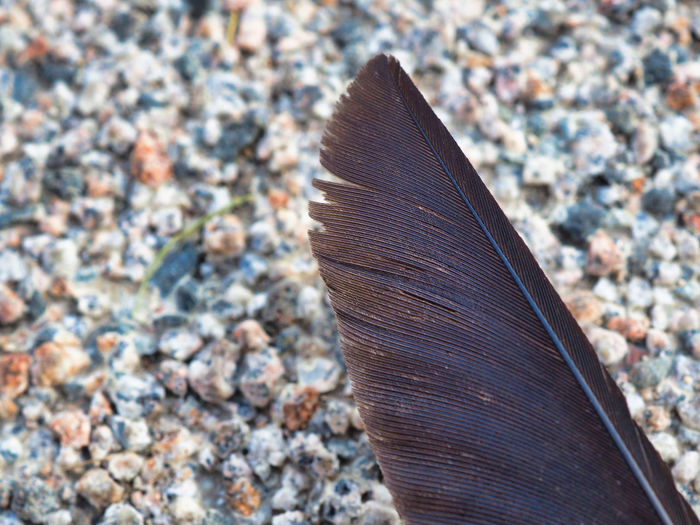 High angle view of feather on pebbles