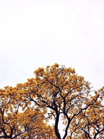 Yellow tree Enjoying Life ArtWork Life Feature Hanging Out Picturing Individuality Taking Photos New Colour Of Life City Street Relax Tree Flowers Nature Nature Photography Featured Photo