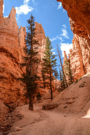 Bryce Canyon Arid Climate Beauty In Nature Bryce Canyon National Park Day Geology Landscape Low Angle View Mountain Nature No People Outdoors Physical Geography Rock - Object Rock Formation Rock Hoodoo Scenics Sky Tranquil Scene Tranquility Travel Destinations Tree