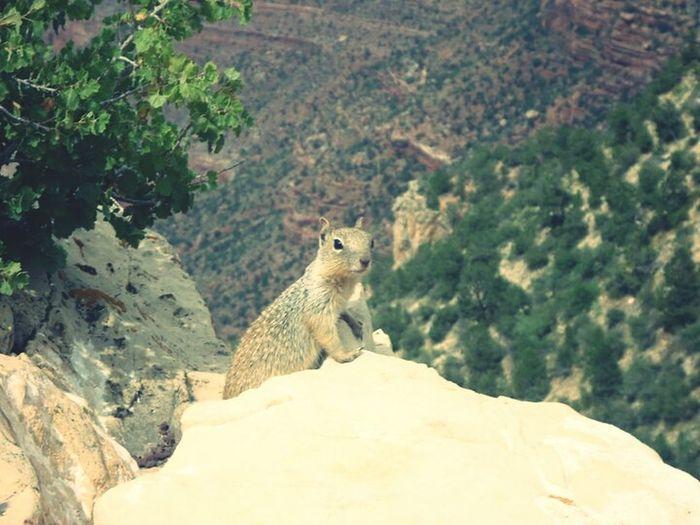 My best shot ever at the grand canyon Grand Canyon Hello World Cheese! Amerika Beautiful USAtrip