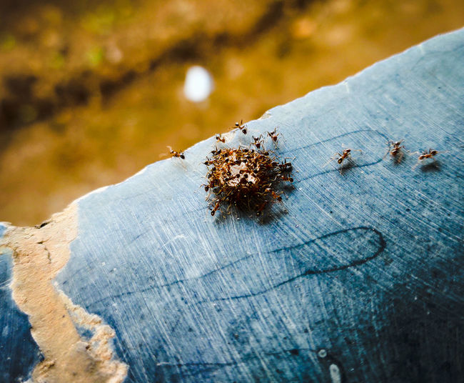 High angle view of ant on wood