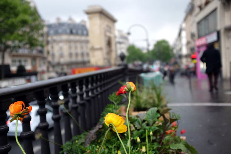Close-up of flowering plants on street in city