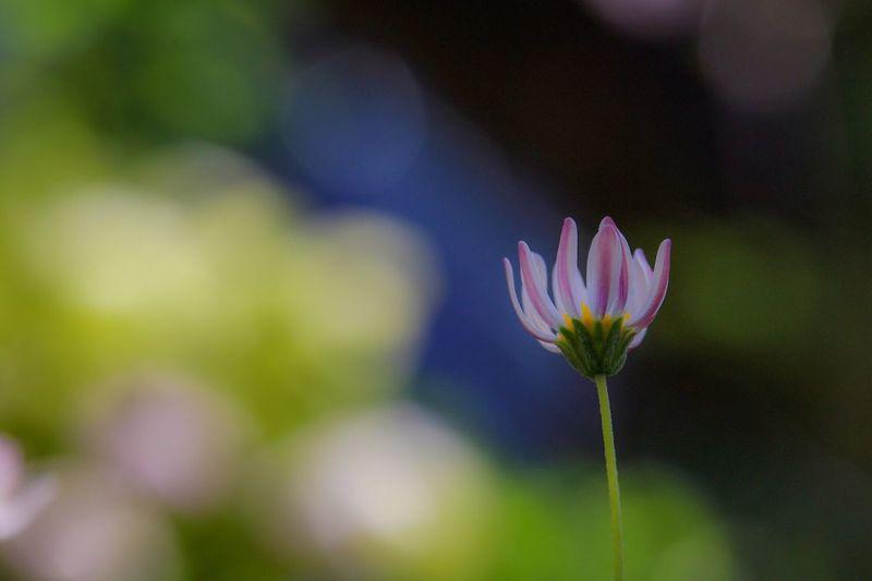 祈 Macro EyeEm Nature Lover Flower My Point Of View Macro Nature Spring Bokeh Photography Shiny Blooming EyeEm Gallery Getting Inspired