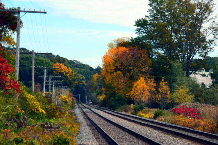 I took this while driving the back roads of southeast Massachusetts; from Framingham to Cape Cod. The Week On EyeEm Autumn Beauty In Nature Cable Change Day Electricity Pylon Growth Leaf Nature No People Outdoors Rail Transportation Railroad Track Scenics Sky Transportation Tree