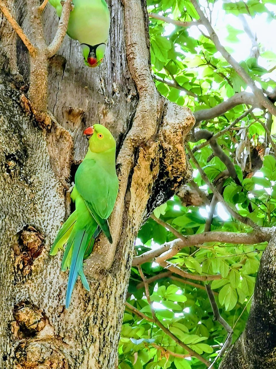 VIEW OF PARROT PERCHING ON TREE TRUNK