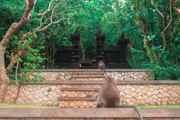 One Animal Green Color Statue Day Architecture Temple Bali INDONESIA ASIA Culture Monkey Mental Spiritual Travel Sculpture Love Travel Destinations Backgrounds Luxury