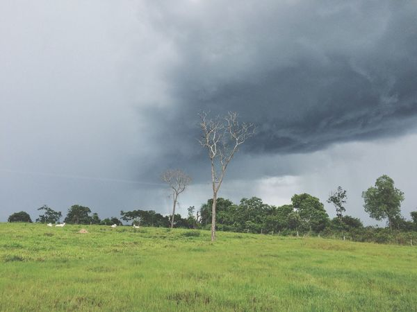 Nature Tree Field Weather Landscape Tranquility Grass Scenics Beauty In Nature Tranquil Scene Sky Outdoors No People Day Storm Cloud Tornado