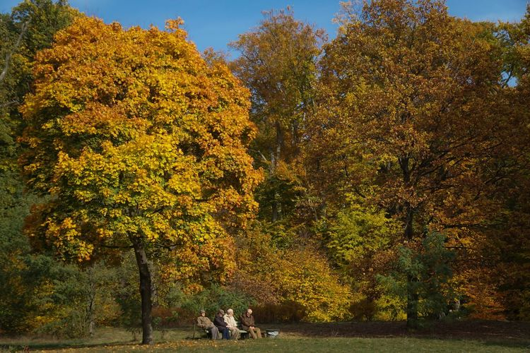 It's autumn in general ...... Autumn Berlin Forest Green Color Herbst Herbststimmung Leaf Lush Foliage Nature Nature Old People Outdoors Pensioner Pensioners Real People Rentner Retired Season  Seatin Bench Sitzbank Streetphotography Tree Urban Yellow This Is Aging
