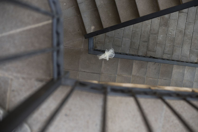 High angle view of a cat