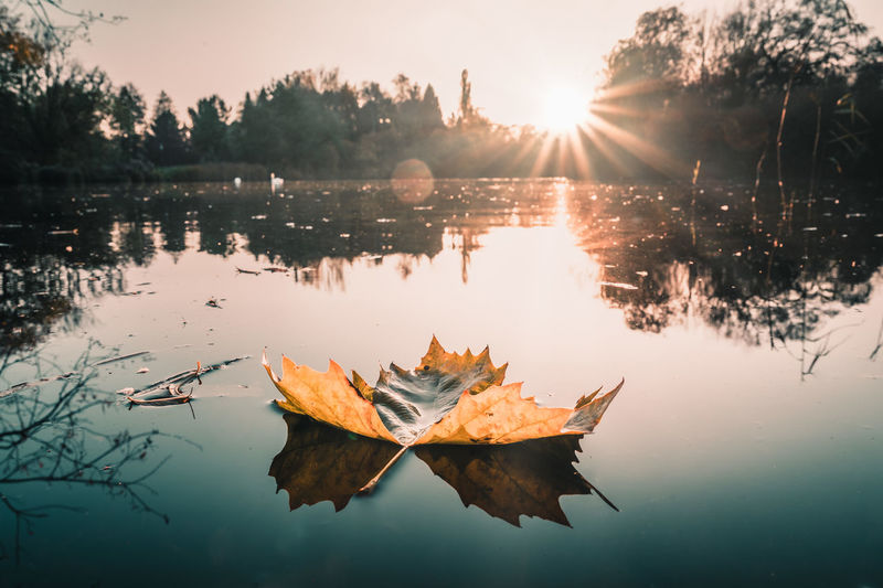 Autumn leaves on lake against sky during sunset