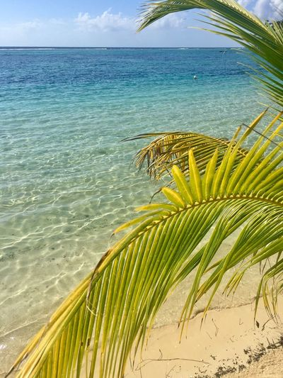 Sea Beach Palm Tree Nature Sand Tropical Climate UnderSea Water Sky Sea Life Coral Plant Beauty In Nature Travel DestinationsBeauty In Nature Sommergefühle Tranquility Romantic Scenery Outdoors Underwater Scenics No People Vacations Exoticism Breathing Space
