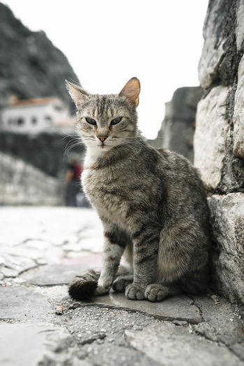 Portrait of cat sitting on stone wall