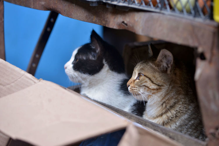 Hungry Cats Animal Themes Animals Cat Lovers Cat Photography Cat Watching Cats Of EyeEm Day DSLR Hungry No People Outdoors Pets Photooftheday Street Photography Tamar Mirianashvili Two Cats Week On Eyeem