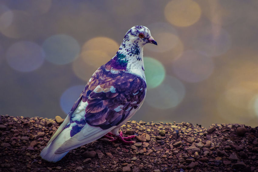 Animal Themes Animal Wildlife Animals In The Wild Beauty In Nature Bird Bokeh Close-up Day Focus On Foreground Nature No People One Animal Outdoors Perching Sunlight