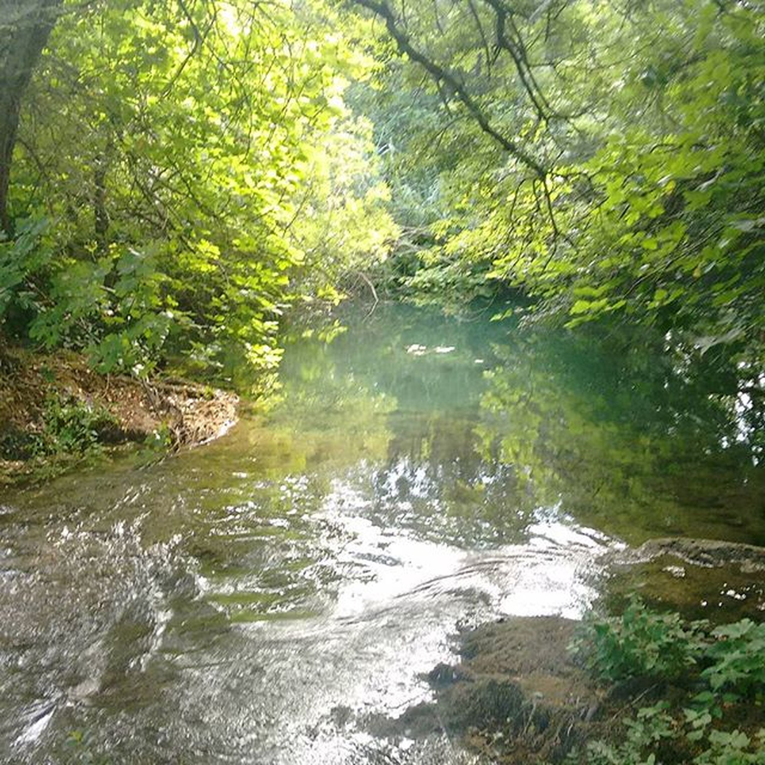 water, tree, tranquility, reflection, nature, tranquil scene, river, forest, stream, beauty in nature, scenics, waterfront, growth, lake, branch, green color, day, no people, outdoors, non-urban scene