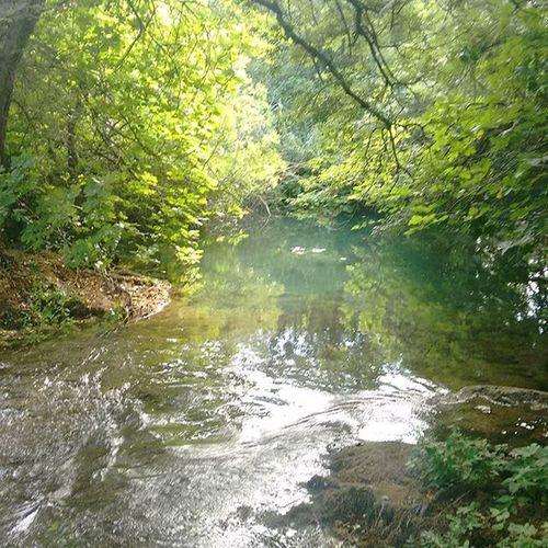 Kroatien Kroatien2015 Croatia Wasser Water Clearwater Klareswasser Baum Bäume Tree Trees Wald Forest Ast Urlaub Holiday Nofilter Nofilterneeded Keinfilter Ohnefilter