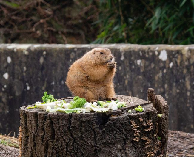Squirrel on tree stump